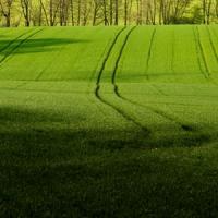 Prima masura in agricultura din alocarea 2014-2020 incepe pe 20 mai
