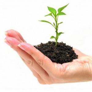 Idei de afaceri mici si profitabile