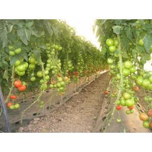 Idei de Afaceri Profitabile: Cultivarea legumelor in solarii - O afacere relativ simpla si cu venituri mari!