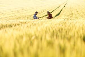 5 IDEI DE AFACERI CONEXE PENTRU ANTREPRENORII DIN AGRICULTURA